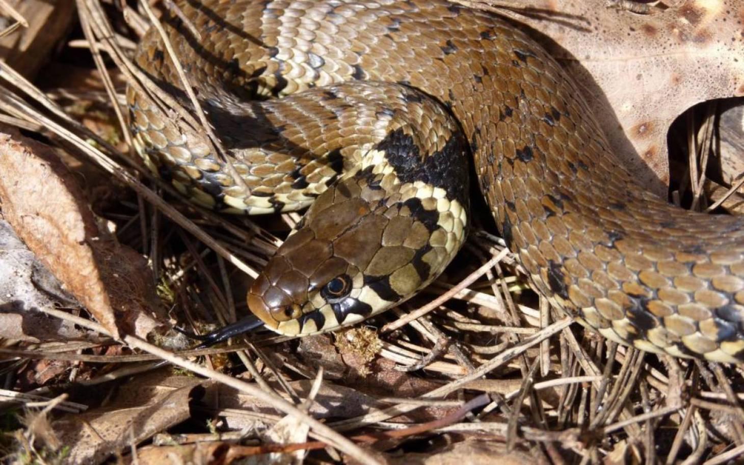 Nos amis les serpents