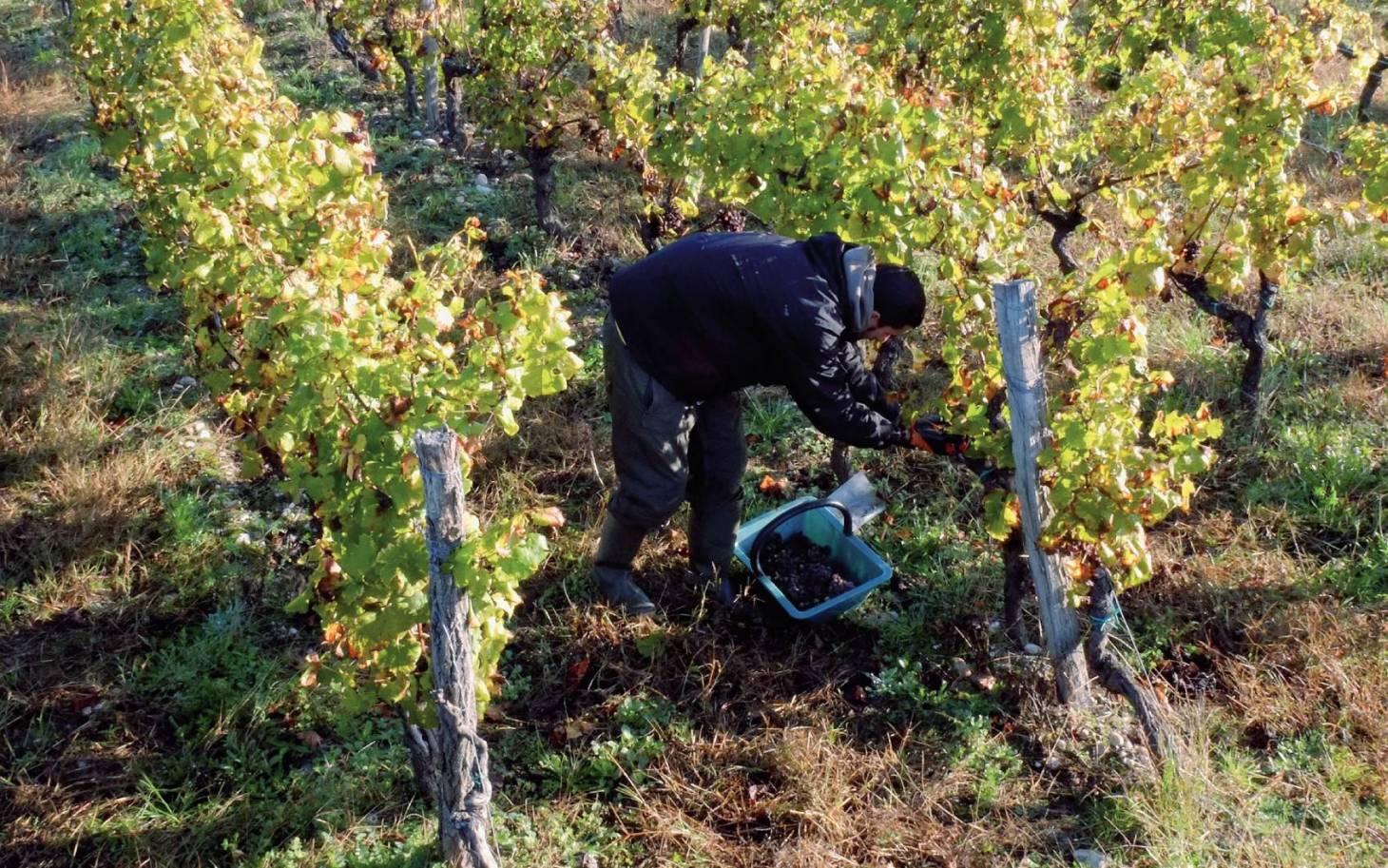 La Vienne terre de vignes