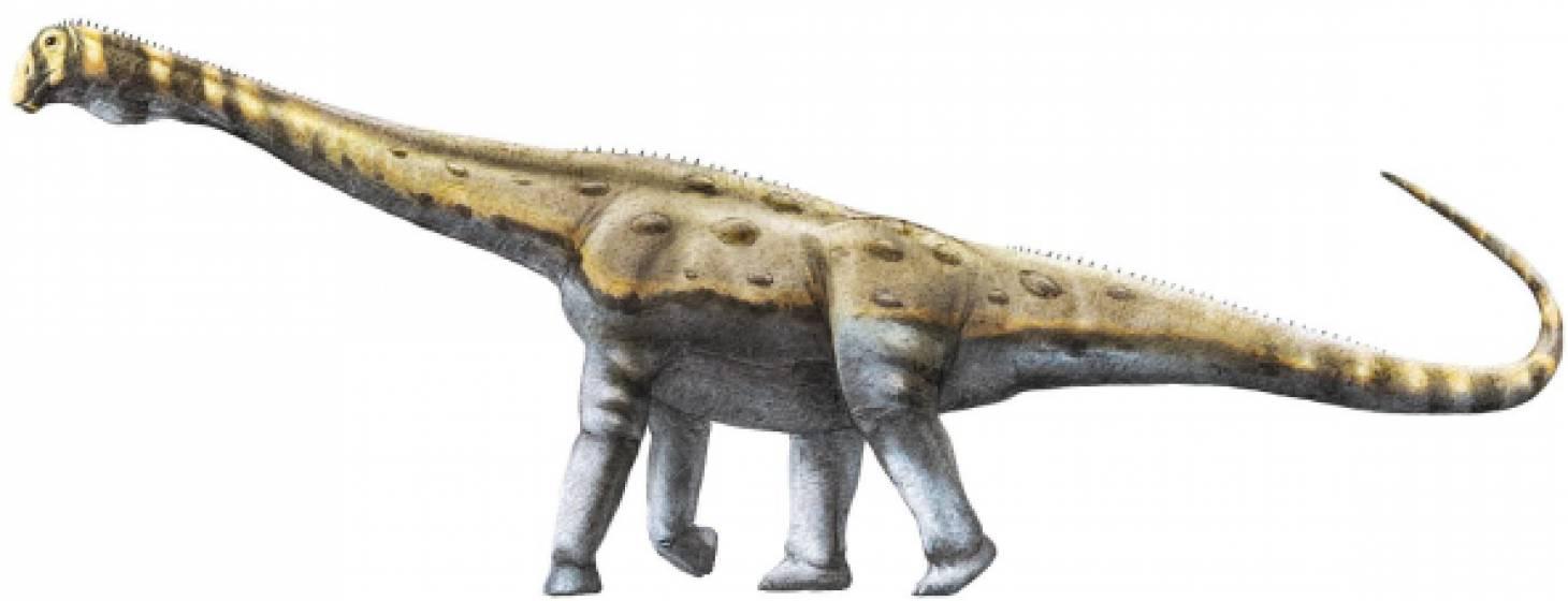 Des chercheurs poitevins découvrent un nouveau genre de titanosaure