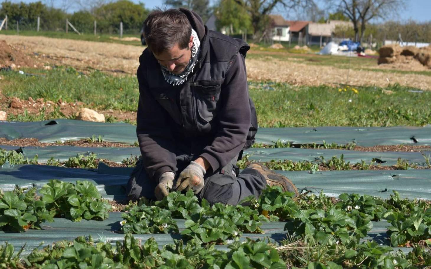 Le fragile destin des surplus de jardin