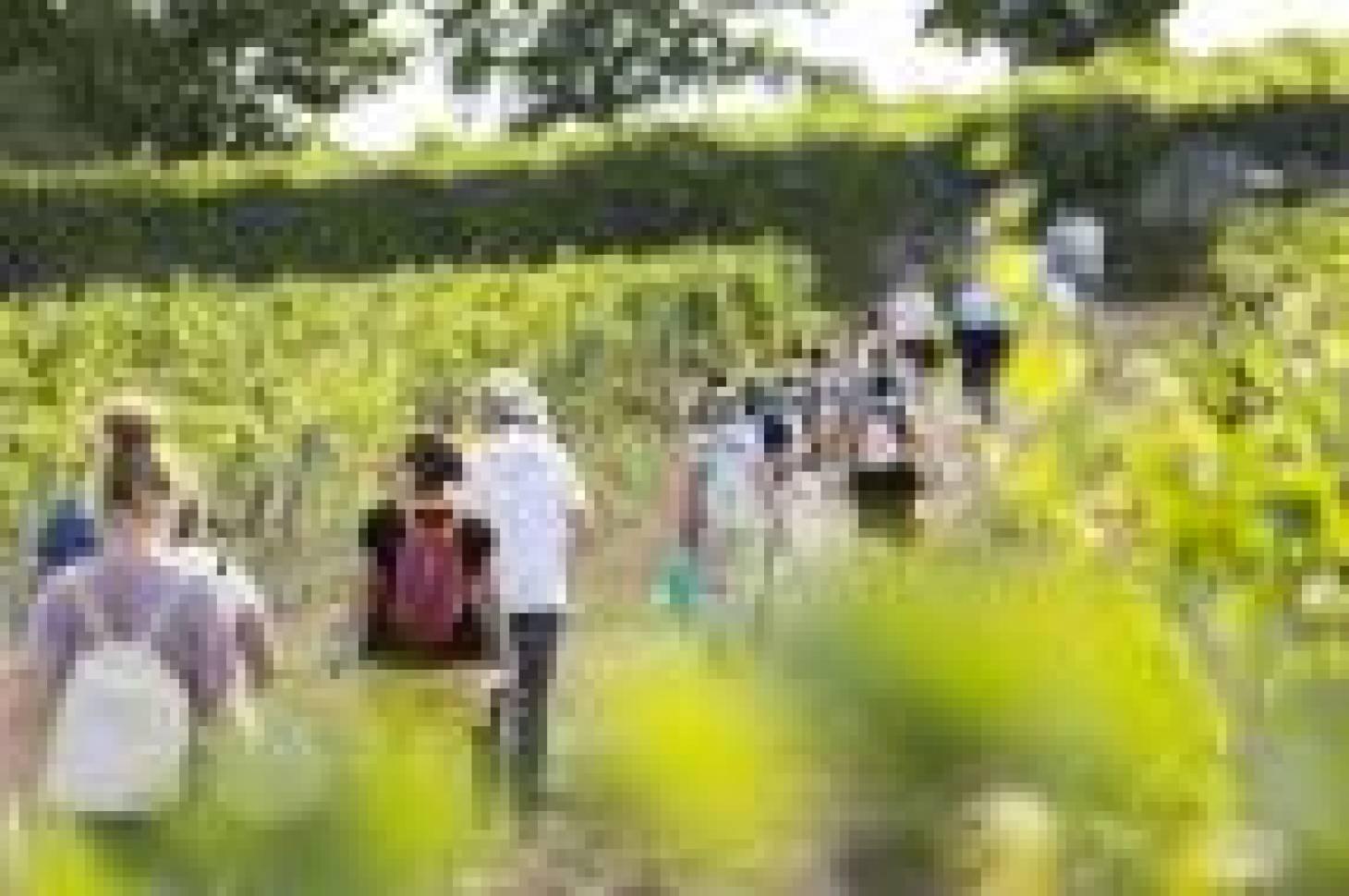 Vignes, Vins, Randosou la balade œnologique pour tous