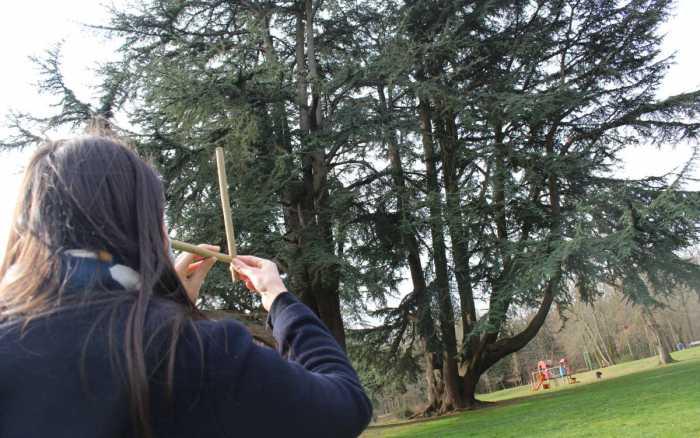 Vienne Nature lance une nouvelle campagne d'inventaire des arbres remarquables