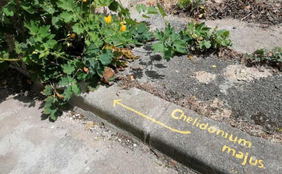 Initiative/Poitiers - Les plantes du centre-ville à l'honneur