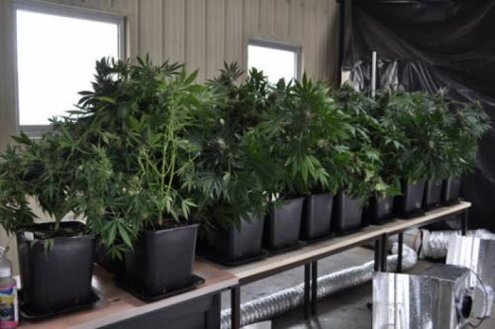 Vingt pieds de cannabis découvert dans l'appartement d'un jeune Poitevin