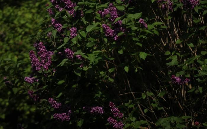 Eco-conso : un jardin zéro déchet