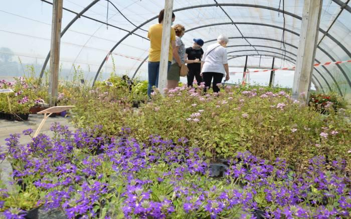 Insertion : Un jardin pour faire société