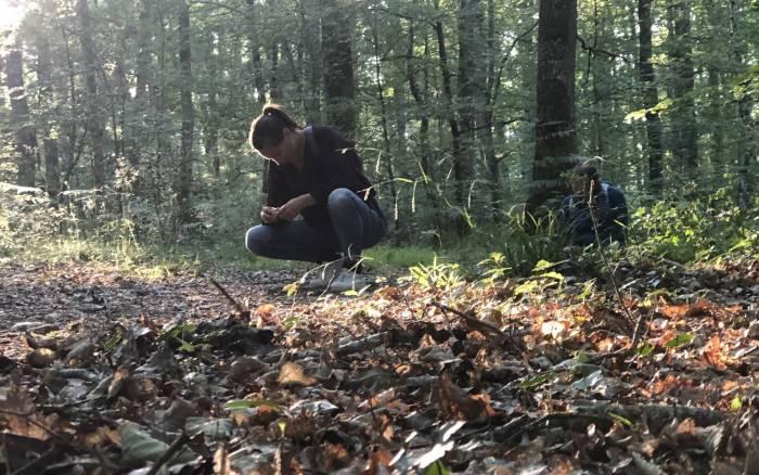 En immersion dans la forêt