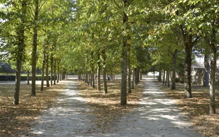 Sécheresse : Nouvelle palette végétale