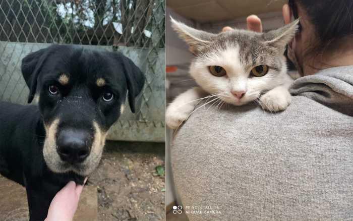 Adoptez-les : Copain et Aglae