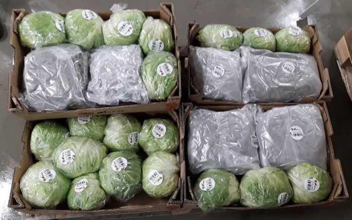 Les douanes de Poitiers ont saisi 157 kg d'herbe de cannabis sur l'A10