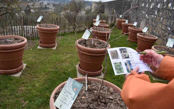 Pollinarium sentinelle, un rempart contre les allergies