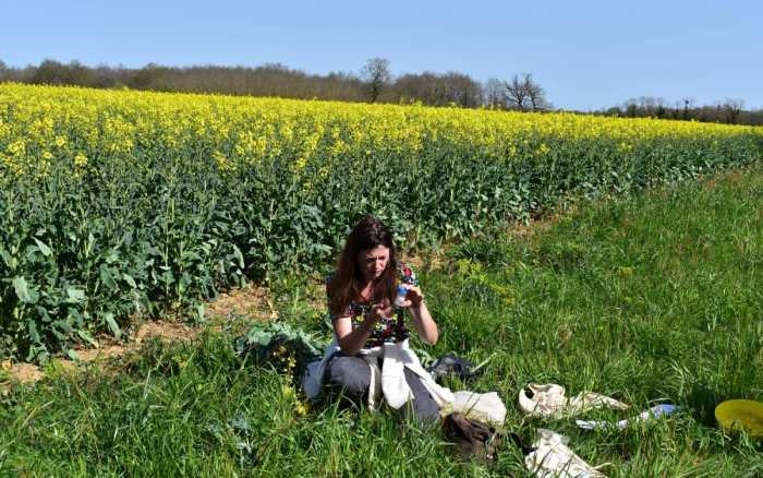 Le colza prépare sa mue agro-écologique