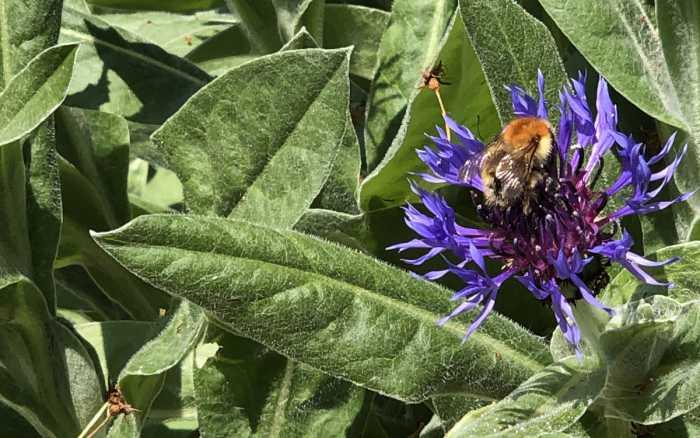 Jardin - Des gestes simples pour la biodiversité