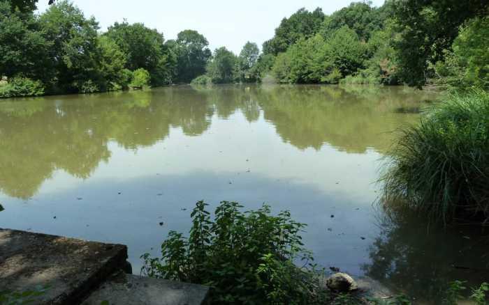 Supprimer les étangs, c'est écolo