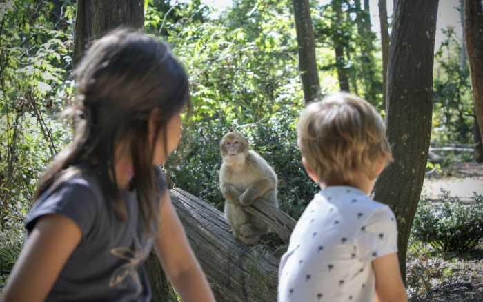 Au plus près de la nature à la Vallée des singes