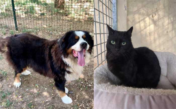 Nesquik et Yin à l'adoption