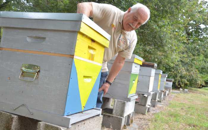 Châtellerault - Les apiculteurs ouvrent leurs ruches