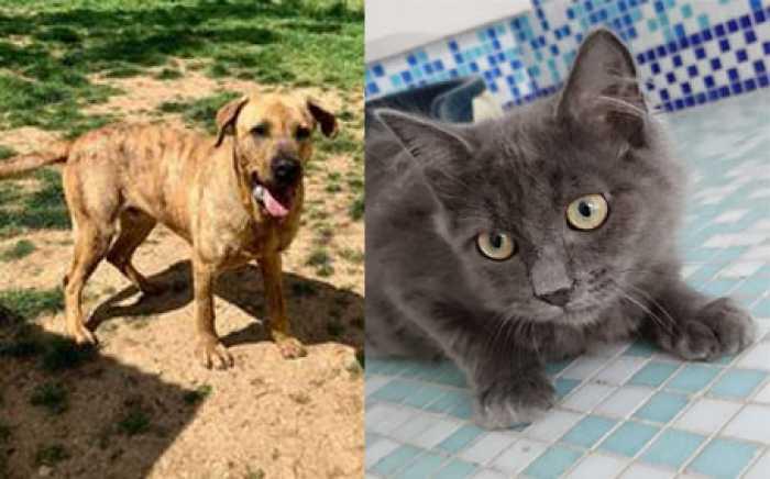 SPA : adoptez-les !