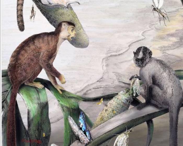 Des primates peuplaient l'Afrique avant Toumaï
