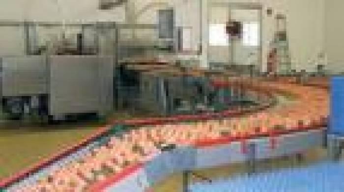 Oeufs contaminés au fipronil : cinq entreprises concernées dont une dans la Vienne